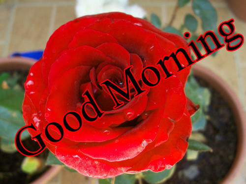 GOOD MORNING IMAGES WITH TEACHERS DAY PICTURES PHOTO FOR FACEBOOK