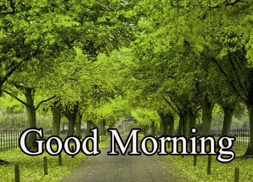 GOOD MORNING MY BEAUTIFUL ANGEL IMAGES PICTURES PHOTO DOWNLOAD