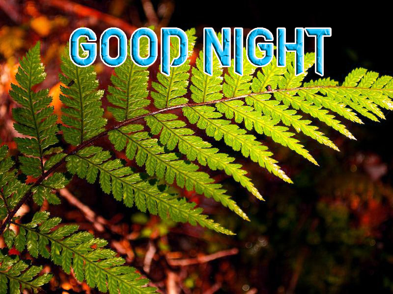 GOOD NIGHT IMAGES  PICS PHOTO FOR BEST FRIEND