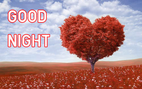 GOOD NIGHT IMAGES PICTURES PHOTO WALLPAPER FREE HD DOWNLOAD