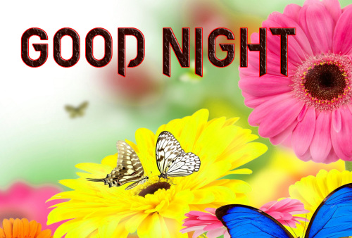 GOOD NIGHT IMAGES WALLPAPER PHOTO PICS WITH FLOWER
