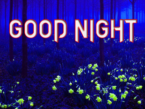 GOOD NIGHT IMAGES PICTURES PHOTO PICS DOWNLOAD