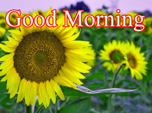 HD Good Morning Images (45)