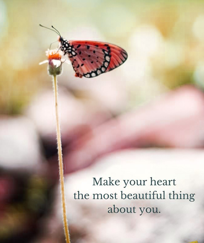 HEART TOUCHING IMAGES FOR WHATSAPP DP PROFILE IMAGES PICS WITH BUTTERFLY