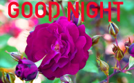 1289+ Latest Amazing good night images With Flower & Nature