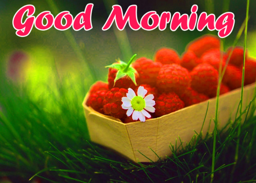 ALL NEW GOOD MORNING IMAGES WALLPAPER PHOTO FREE HD DOWNLOAD