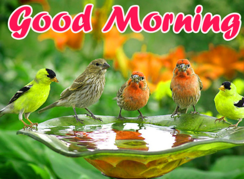 ALL NEW GOOD MORNING IMAGES WALLPAPER PHOTO FOR FACEBOOK