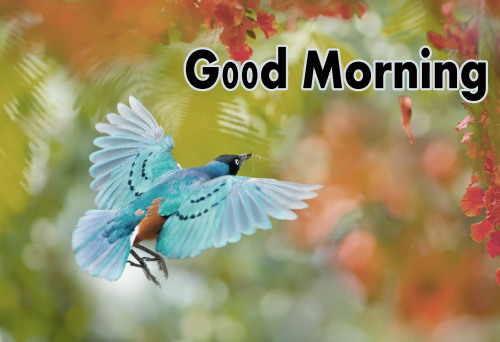 ALL NEW GOOD MORNING IMAGES PICS PICTURES FREE HD DOWNLOAD