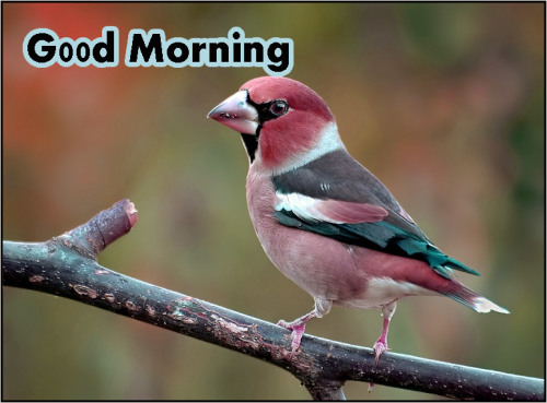 ALL NEW GOOD MORNING IMAGES PHOTO WALLPAPER FREE HD