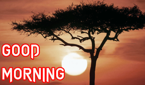 NATURE GOOD MORNING IMAGES PHOTO WALLPAPER DOWNLOAD