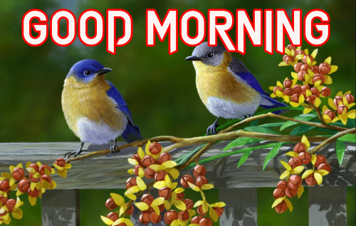 NATURE GOOD MORNING IMAGES PHOTO PICS DOWNLOAD