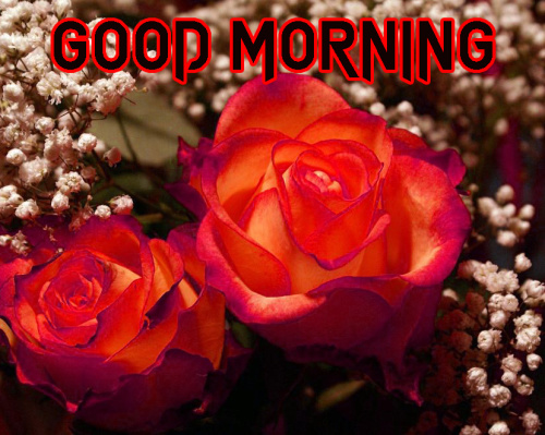 NATURE GOOD MORNING IMAGES WALLPAPER PHOTO DOWNLOAD