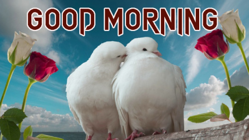ROMANTIC GOOD MORNING IMAGES FOR GF & BF PICTURES PHOTO HD DOWNLOAD