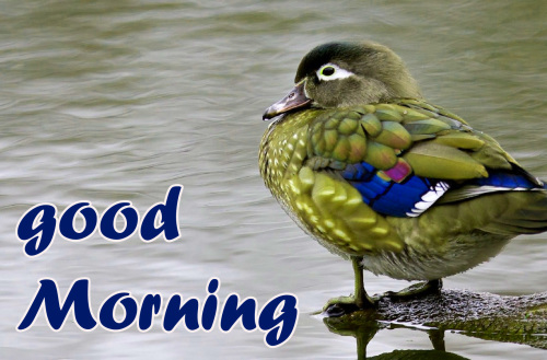 TODAY GOOD MORNING IMAGES PHOTO PICS FREE HD
