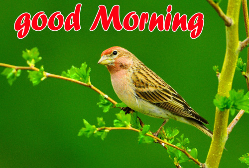 TODAY GOOD MORNING IMAGES WALLPAPER PHOTO HD
