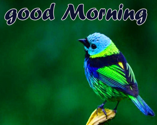 TODAY GOOD MORNING IMAGES PHOTO WALLPAPER FREE DOWNLOAD