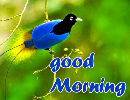 TODAY GOOD MORNING IMAGES PICS PHOTO FREE DOWNLOAD
