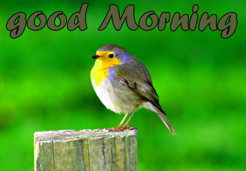 TODAY GOOD MORNING IMAGES WALLPAPER PICS DOWNLOAD HD