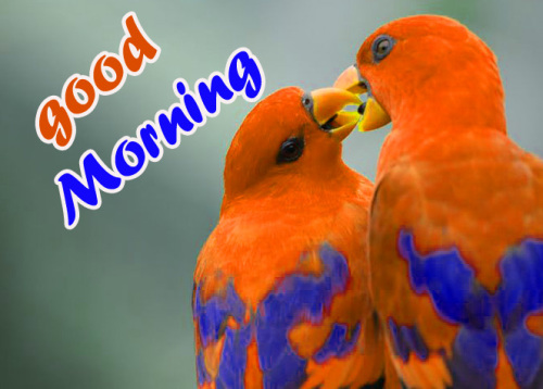 TODAY GOOD MORNING IMAGES WALLPAPER PHOTO FOR FACEBOOK