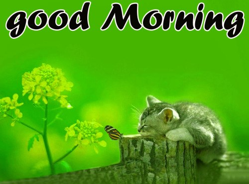TODAY GOOD MORNING IMAGES PICTURES PHOTO DOWNLOAD