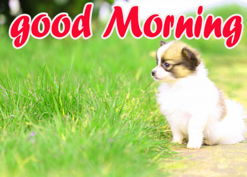 TODAY GOOD MORNING IMAGES WALLPAPER PICS FREE HD
