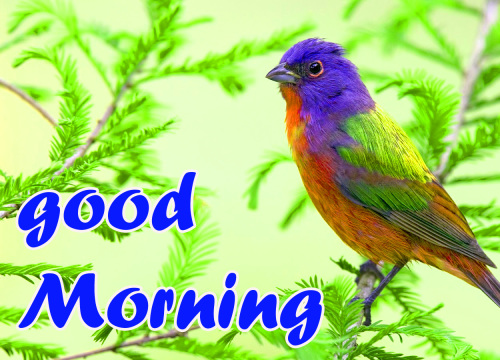 TODAY GOOD MORNING IMAGES PHOTO PICS HD