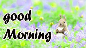 TODAY GOOD MORNING IMAGES WALLPAPER FREE DOWNLOAD