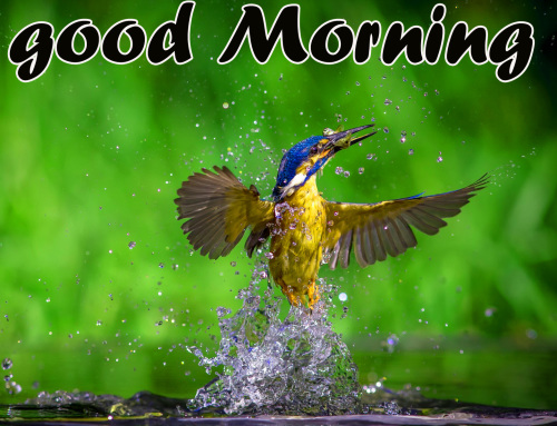 TODAY GOOD MORNING IMAGES PICTURES PICS FREE HD DOWNLOAD