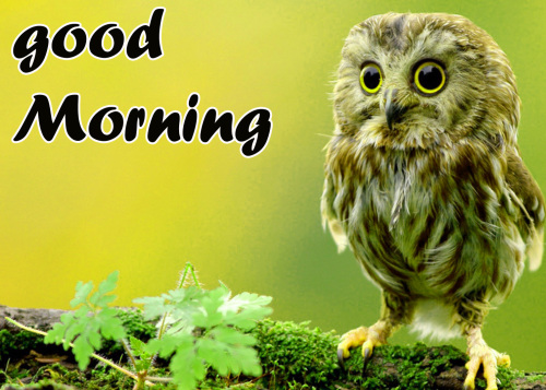 TODAY GOOD MORNING IMAGES WALLPAPER PICTURES FREE HD