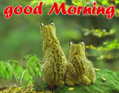 TODAY GOOD MORNING IMAGES PICS PHOTO FREE HD