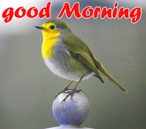 TODAY GOOD MORNING IMAGES PICTURES PHOTO FREE HD