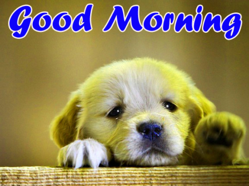 VERY CUTE GOOD MORNING IMAGES PICTURES PICS FREE HD DOWNLOAD