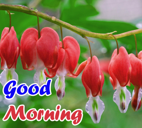 VERY SWEET GOOD MORNING IMAGES  WALLPAPER PHOTO DOWNLOAD