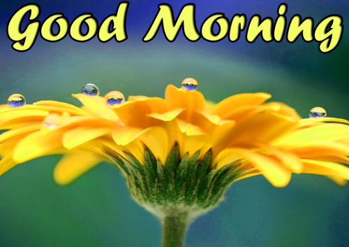 VERY SWEET GOOD MORNING IMAGES WALLPAPER DOWNLOAD