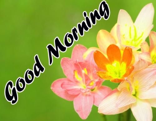 VERY SWEET GOOD MORNING IMAGES WALLPAPER PHOTO FOR FACEBOOK
