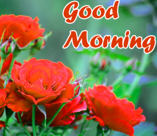 VERY SWEET GOOD MORNING IMAGES PICTURES PHOTO HD