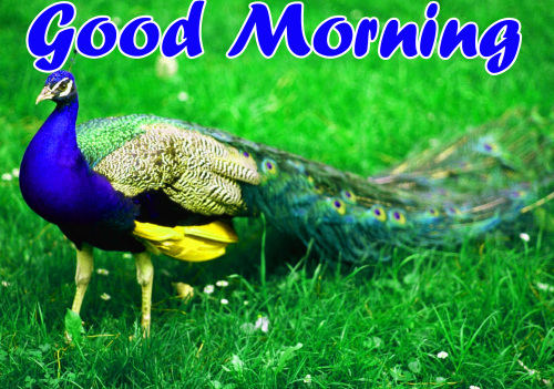 VERY SWEET GOOD MORNING IMAGES PICS PHOTO DOWNLOAD