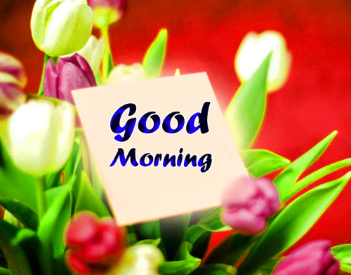 VERY SWEET GOOD MORNING IMAGES PHOTO PICTURES FREE HD