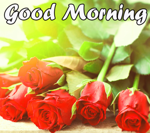 VERY SWEET GOOD MORNING IMAGES WALLPAPER PHOTO FOR WHATSAPP