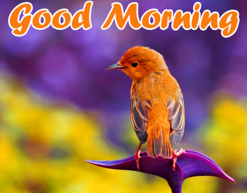 VERY SWEET GOOD MORNING IMAGES PHOTO PICTURES HD