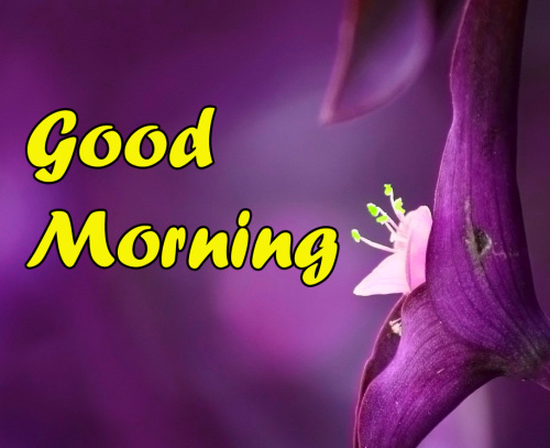 BEST GOOD MORNING IMAGES PICS PHOTO FREE DOWNLOAD