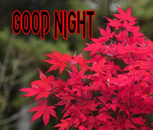 GOOD NIGHT IMAGES WALLPAPER PHOTO FOR WHATSAPP