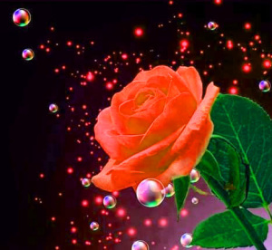 BEAUTIFUL IMAGES FOR WHATSAPP DP PIC WALLPAPER FOR RED ROSE